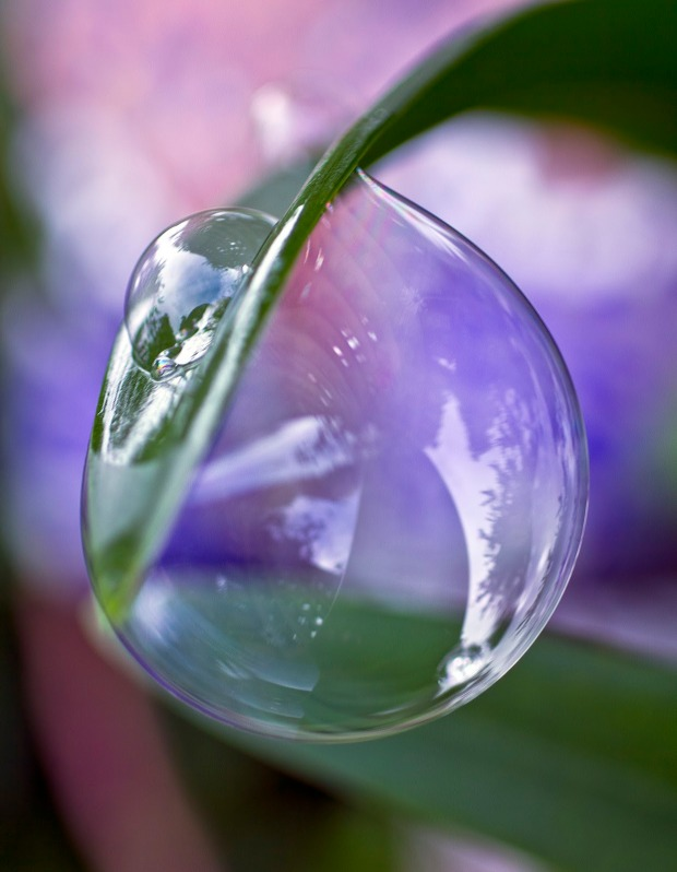 Bubble on leaf