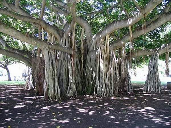 amazing-unusual-trees-8