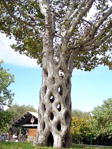 amazing_tree2