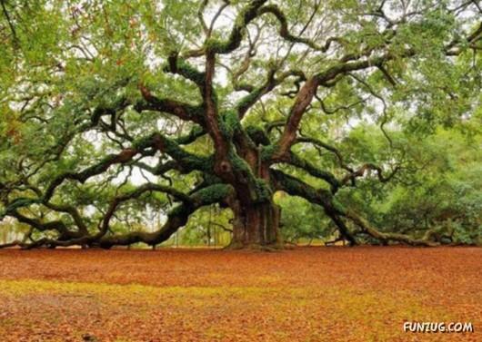 most_unusual_trees_07
