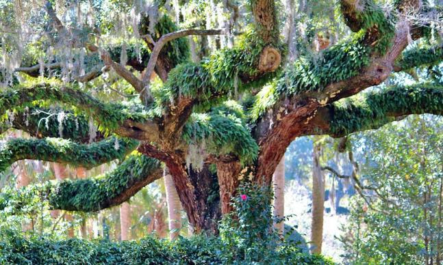 unique-tree-cynthia-guinn