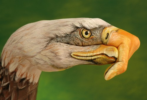Bald-Eagle-on-green1-499x340