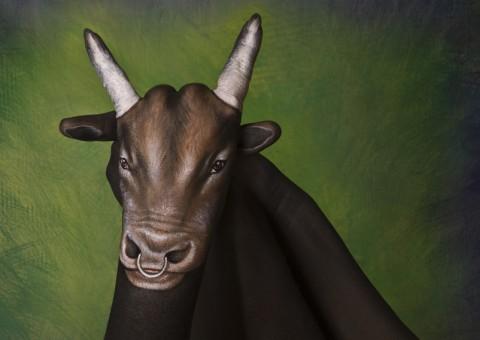 Bull-480x340