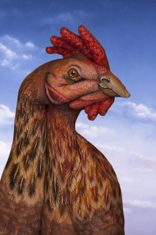 Chicken-226x340