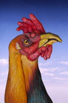 Cock-226x340