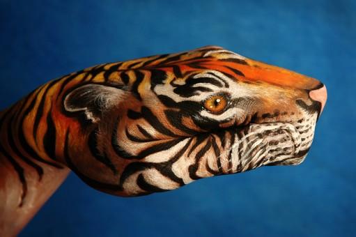 Tiger1-511x340