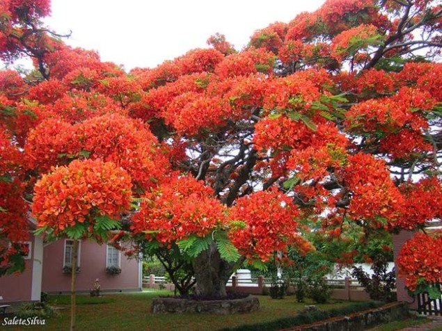 most-beautiful-trees-4