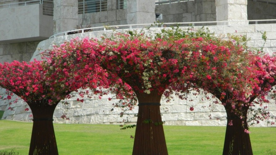 unique-trees-also-red-flowers-for-special-home-lwithscaping-idea-948x533