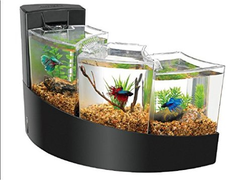 Cool-Betta-Fish-Tanks