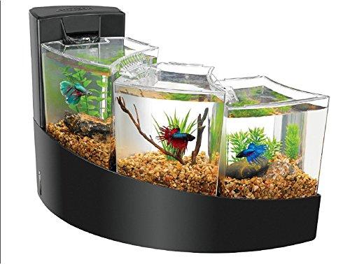 Cool-Betta-Fish-Tanks